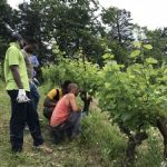 """2nd meeting of the """"school in the vineyard"""" with foreign refugees"""