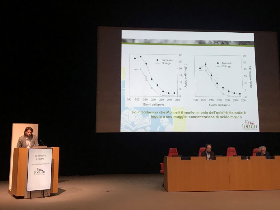Tommaso Frioni telling about the minor cultivars in response to the climate change
