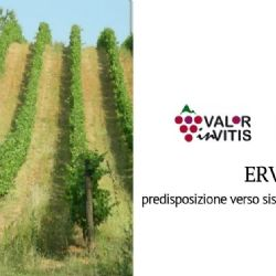 From Ervi the new opportunities for the viticulture of