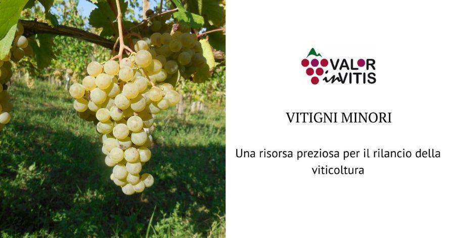Vitigni minori, una risorsa preziosa per il rilancio della viticoltura piacentina