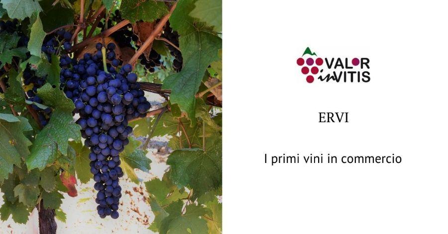 ERVI, i primi vini in commercio